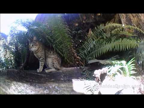 Update on my Cat Habitat For my Bengal and Savannah cats 2013 HD
