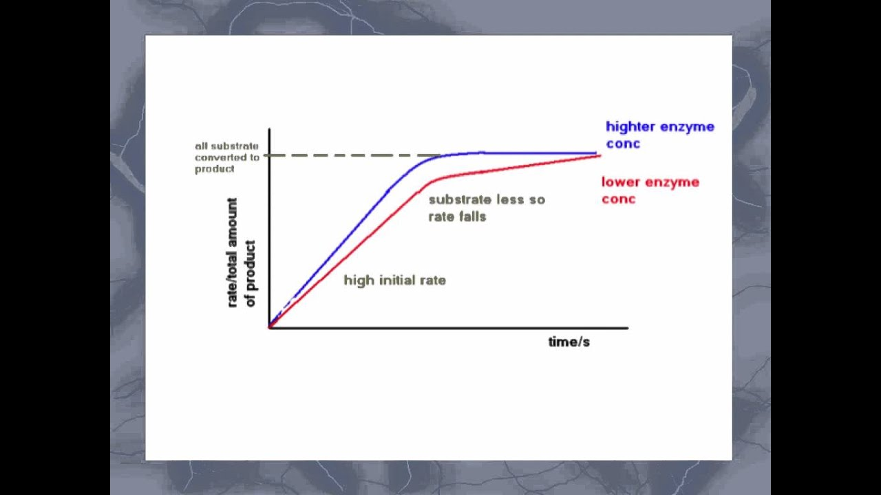 As Level C 5 Effect Of Enzyme And Substrate Concentration On Enzyme Activity