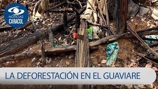Imágenes que duelen: deforestación le está arrancando la vida a los bosques en Colombia