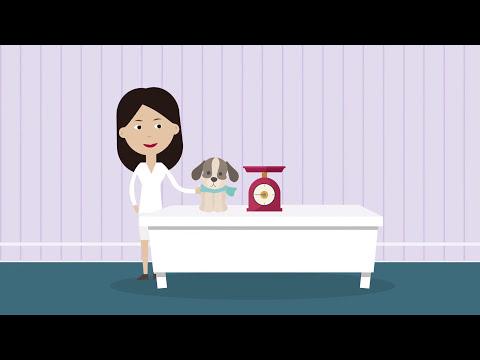 Программа Енот повышает эффективность ветеринарной клиники (Часть 1)