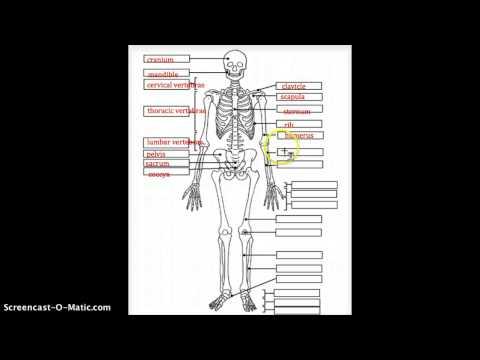Label Your Skeleton
