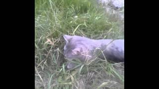 Кошка первый раз вышла гулять. ))))
