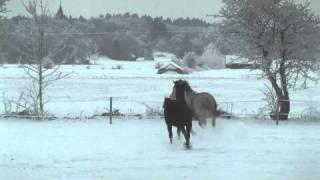 Walle o Flisan i snön 2010