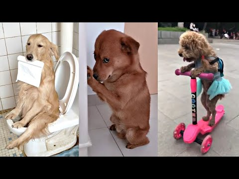 Funniest Animals ? - Best Of The 2020 Funny Animal Videos ? - Cutest Animals Ever ??