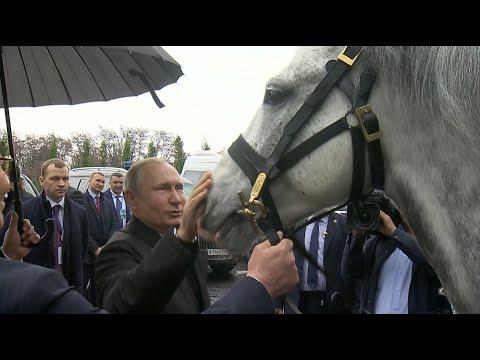 Смотреть фото Реакция Путина на подарок Жээнбекова — скакуна и тайгана. Видео новости Россия