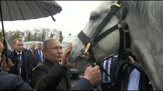 Реакция Путина на подарок Жээнбекова — скакуна и тайгана. Видео