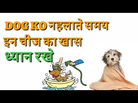 Common Mistakes You Make While Bathing Your Dog | in Hindi | mistake make while bathing
