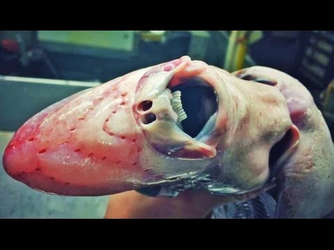 Fish That Look Like