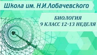 Биология 9 класс 12-13 неделя Химическая организация клетки