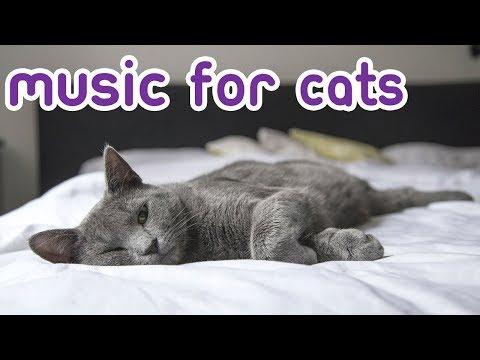 Lagu Untuk Kucing! Memerangi Kecemasan Dengan Musik Yang Tenang Untuk Kucing! BARU 2019!