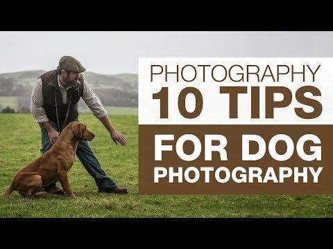 PHOTOGRAPHY BASICS | 10 Tips for Dog Photography