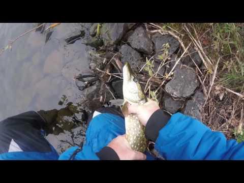 видео ловля щуки на блесну вертушку в