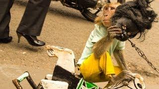 Jakarta Monkey Tour, Topeng Monyet, Part One