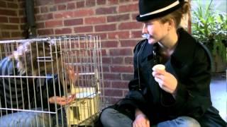 L'Histoire Bizarre D'Arsene Lupin