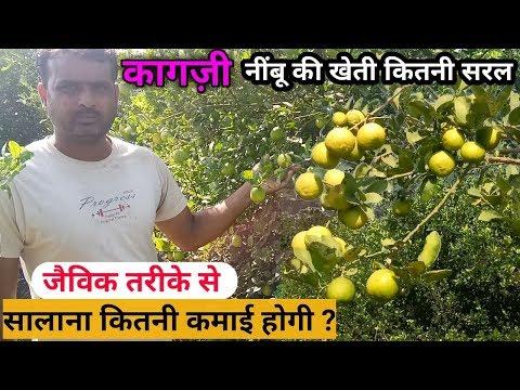 How to Grow Lemon Plant | Organic Lemon Farming | कैसे करे जैविक तरीके से कागज़ी नींबू की खेती
