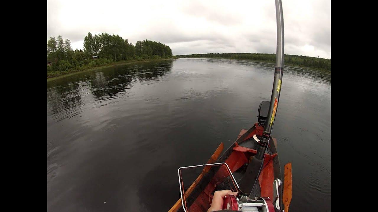 Tornionjoki Lohi
