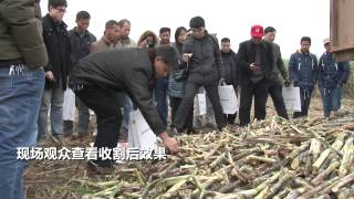 Vid  Zoomlion AS60 Cane Harvester, TV China