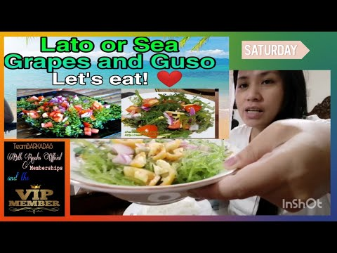 Lato or Sea Grapes and Guso: Enjoy the Health Benefits of Delicious Sea Grapes