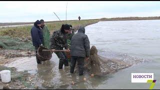 Акция Романа Русева: Днестровский лиман пополнили рыбой