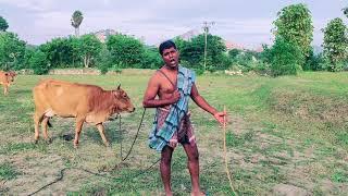 Azhagna pulli maane Tamil song