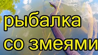 Рыбалка летом плотва густера змеи и крапива Отчет о рыбалке за 26 июня
