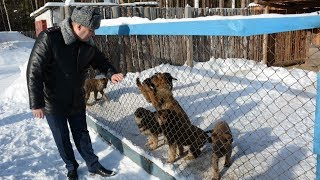 Где выращивают собак для колоний? Real video