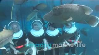 Sunlover Reef Cruises Seawalker Thumbnail