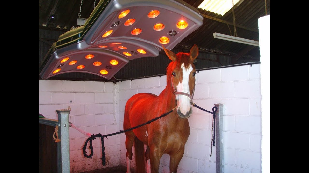 Horse Care - Far Infrared Therapy