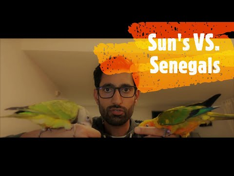 Comparing Sun Conures And Senegal Parrots