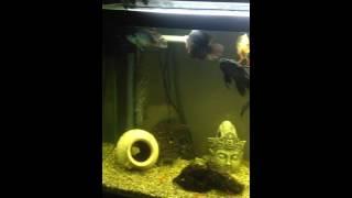 125 gallon freshwater aquarium