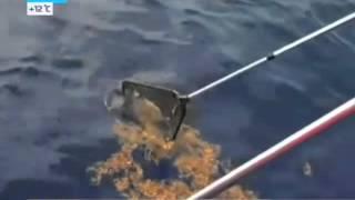 Из Мирового океана загадочно исчезает 90% пластикового мусора