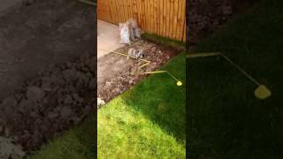 Cute bunny rabbit Sooty fails to measure up