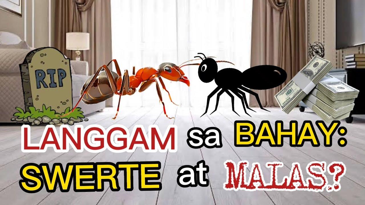 MGA PAHIWATIG NG LANGGAM SA INYONG BAHAY: MAY SWERTE AT MALAS? MGA PAMAHIIN SA LANGGAM