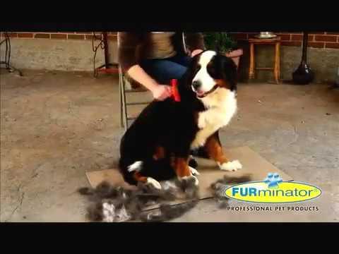 Furminator come funziona e per quali cani e gatti for Youtube cani e gatti