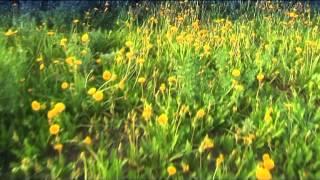 TATAR Song Зөлфия Минһаҗева Сагыну