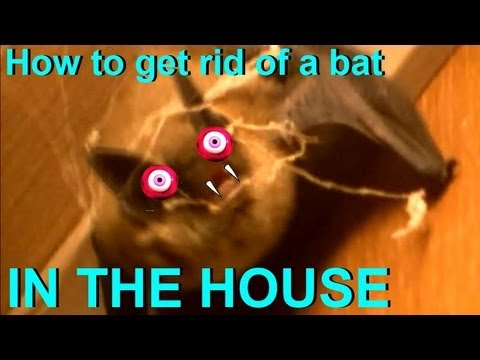 How To Get Rid Of Bat In The House