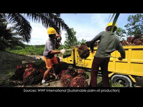 ECON 2210 : Tighter supply and higher demand to push up CPO prices - IJM Plantations