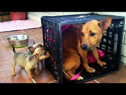 Mama Dog Was Devastated After Losing Her Pups. But When She Sees These Two? My Heart Can't Take It!