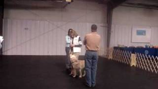 Miles Earns His Companion Dog (cd) Title At Youngstown All Breed Training Club
