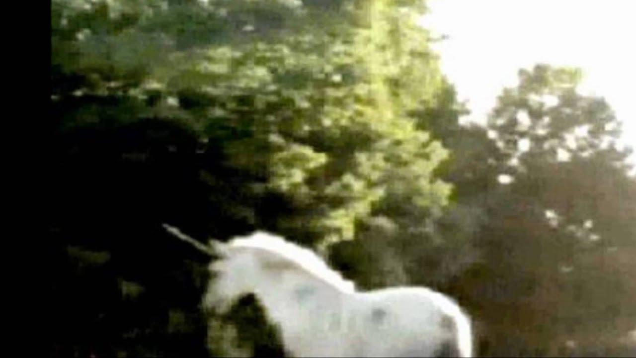 El supuesto avistaje de un unicornio provocó conmoción en