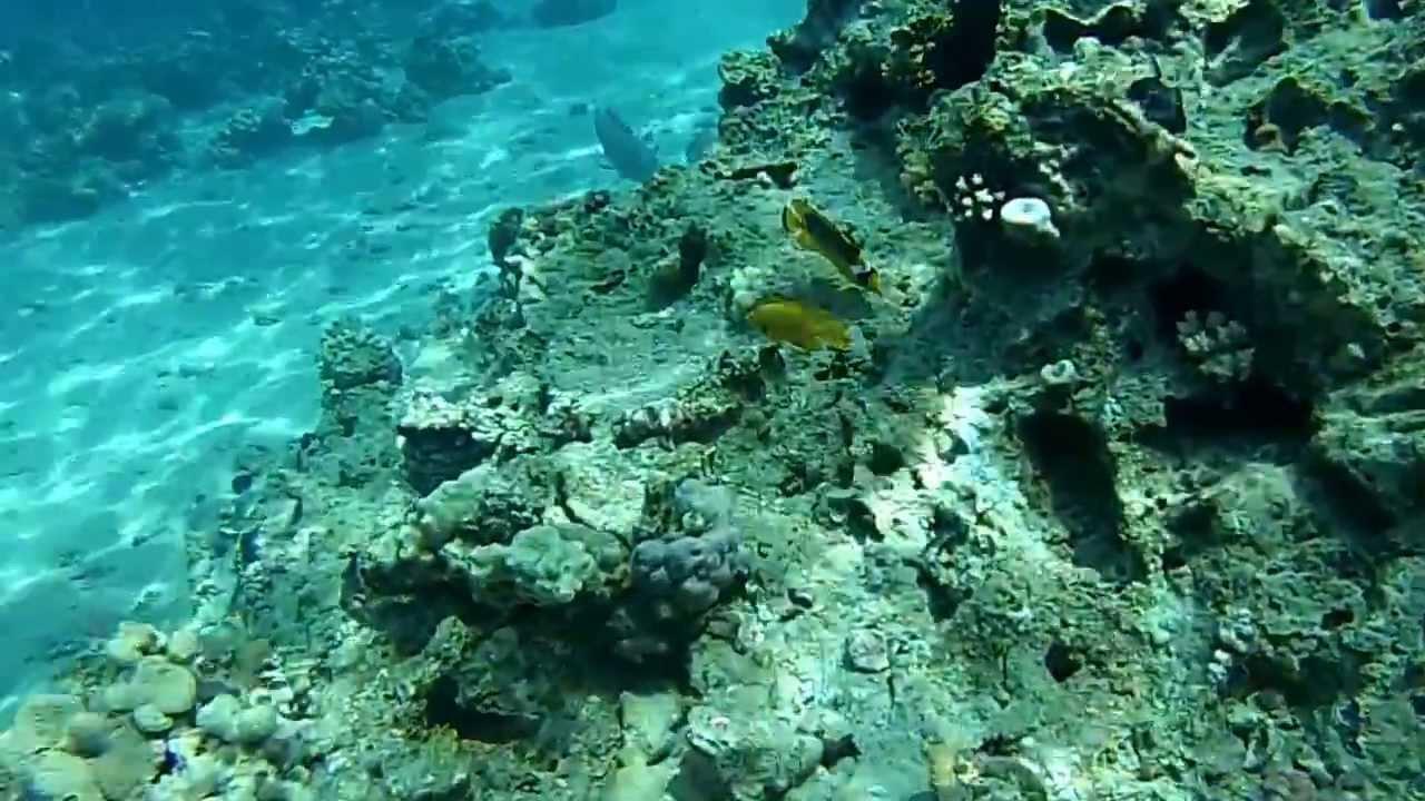 Risultati immagini per fondali marini