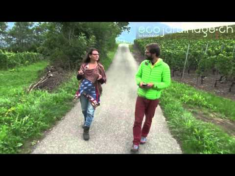 Barbara Garofoli, Permaculture  Suisse (21 min)