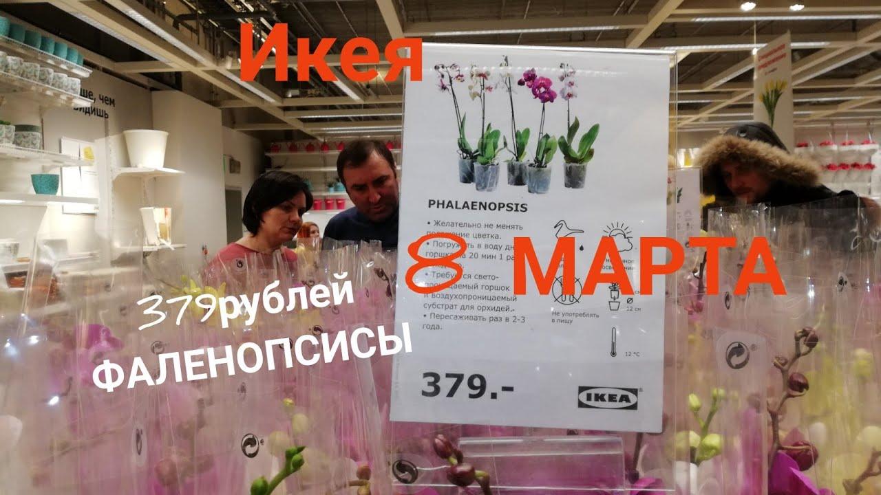 ИКЕЯ 14 марта 2018 г. Остатки ОРХИДЕЙ. - YouTube