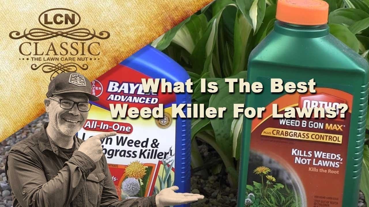 Types of lawn grass weeds - What Is The Best Weed Killer For Lawns Best Weed Control