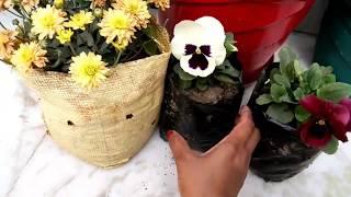 मेरे सर्दियों वाले फूलों की शॉपिंग,winter flowers shopping, सर्दियों में ये फूल जरूर लगाएं