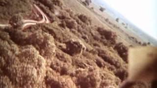Вертолёты в воздушном бою