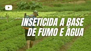 vuclip Aprenda a preparar um inseticida a base de fumo e água que tem apresentado sucesso   Gazetaweb com