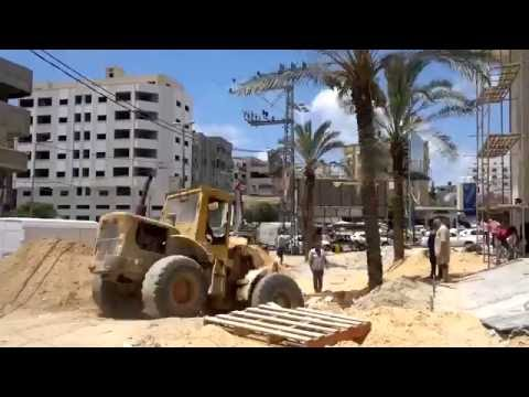 Tree Transplanting with ArborCo Melbourne in gaza
