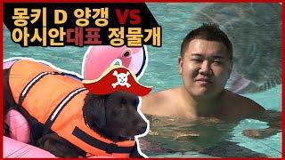 [애견수영장] 아시아물개 정보스와 개버랜드 해적단 정양…