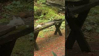 Nuthatch scares away a chipmunk filmed by Jonathan Zschau
